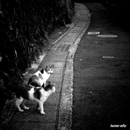 街猫194