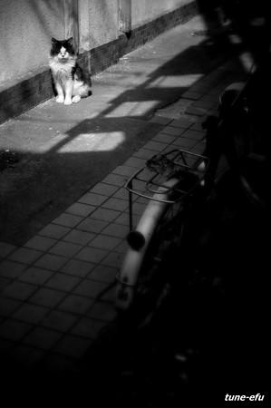 街猫199