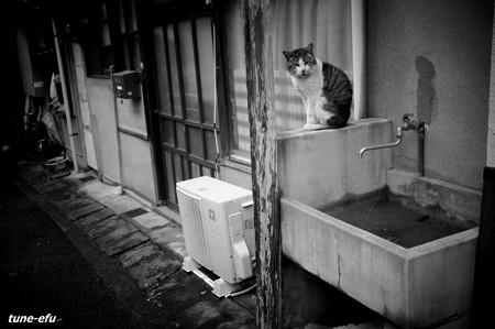 街猫210