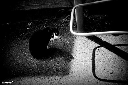 街猫213