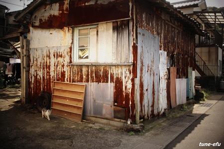 街猫216