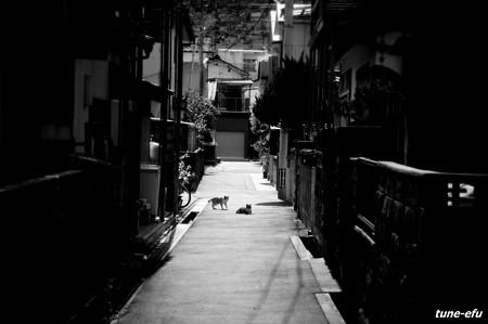 街猫217