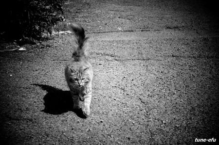 街猫221