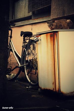 街猫229