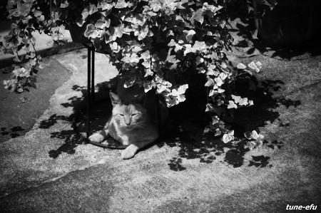街猫231