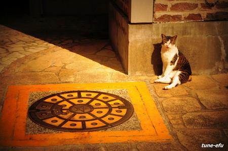 街猫234