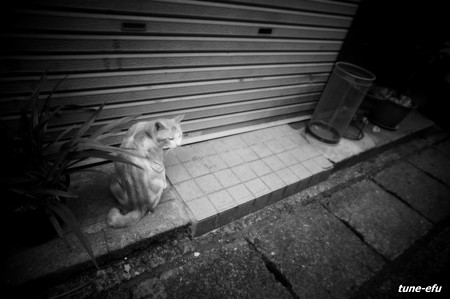 街猫253