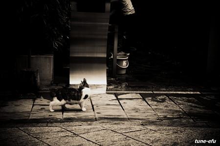 街猫259