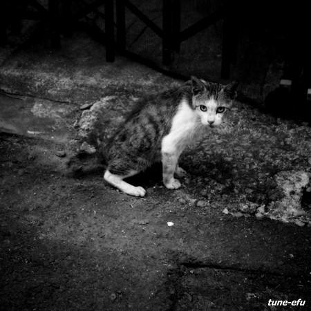 街猫292
