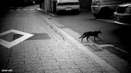 街猫294