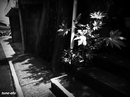 観葉植物のある道
