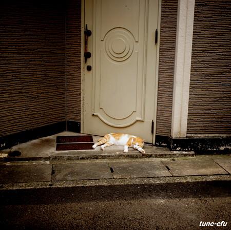 街猫318