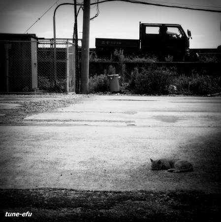 街猫320