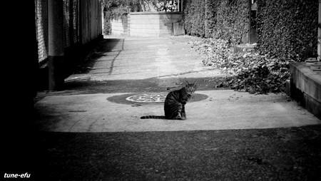 街猫322
