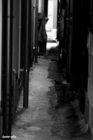 街猫343