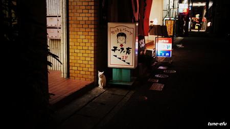 街猫351