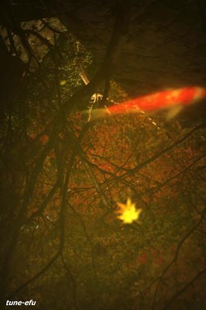 季節は秋#2