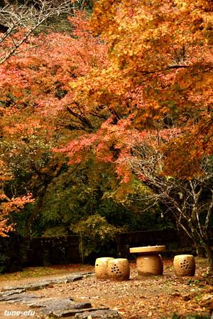 季節は秋#3