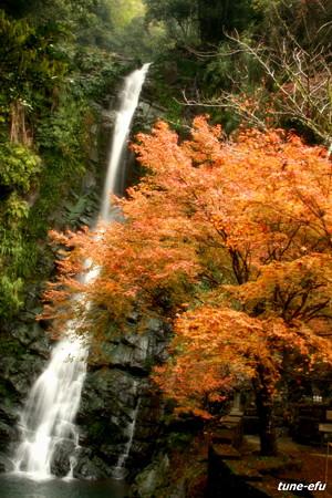 季節は秋#4