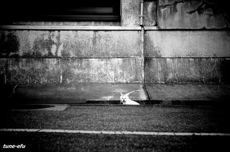 街猫356