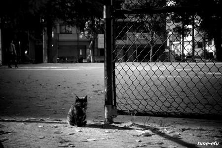 街猫357