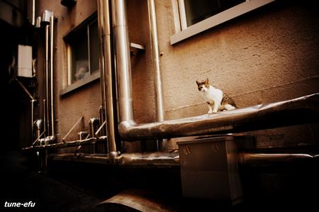 街猫361