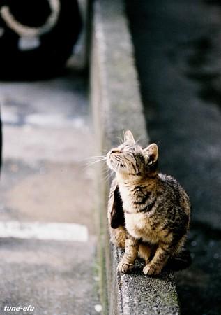 街猫371~陽だまり~