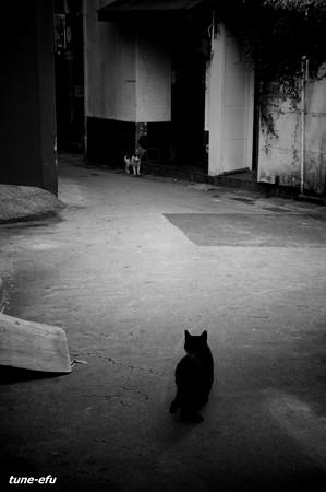 街猫385