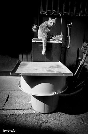 街猫393