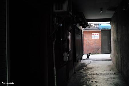 街猫406
