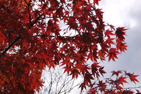 空の色、紅葉の色