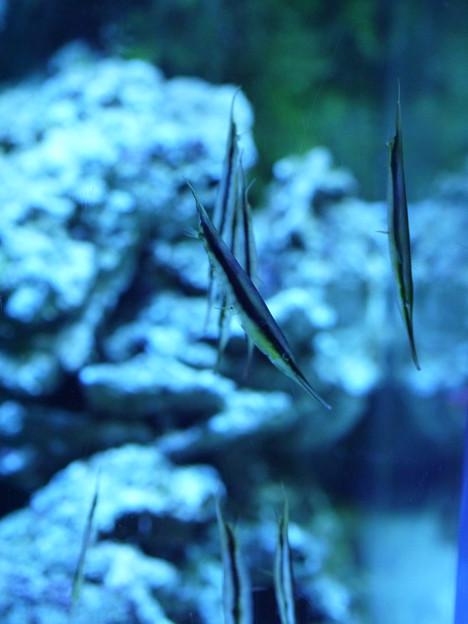 フォト蔵立ち泳ぎする魚?アルバム: 日々是好日・2013 (412)写真データ渡り鳥sさんの友達 (1)フォト蔵ツイート