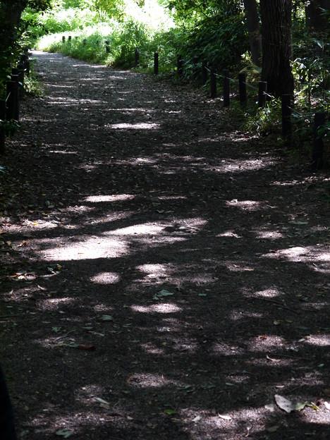 妖精の足跡