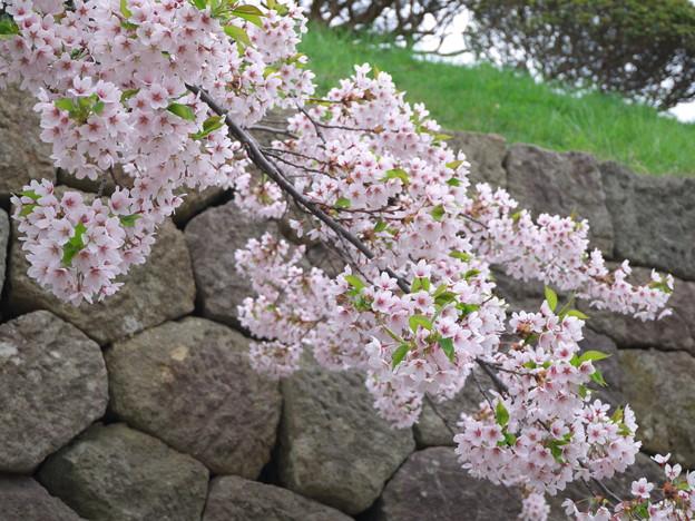 花薫る石垣