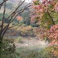 もみじ谷大吊橋の紅葉(2013/11/3)