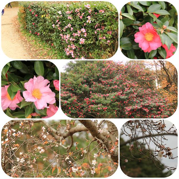 お花(こども自然公園2013/12/8)