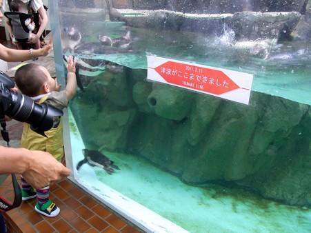 20120715 松島 ペンギンプール03