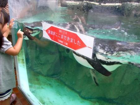 20120715 松島 ペンギンプール02