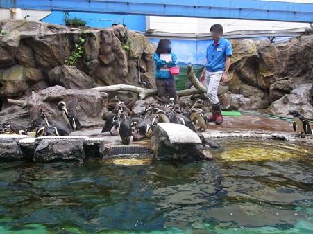 20120715 松島 ケープこどものハルちゃん01