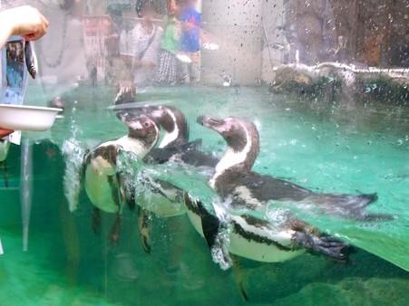 20120715 松島 ペンギンランチ06