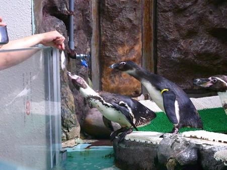 20120715 松島 ペンギンランチ07
