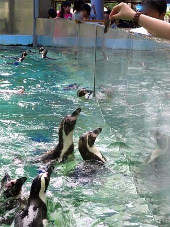 20120715 松島 ペンギンランチ09