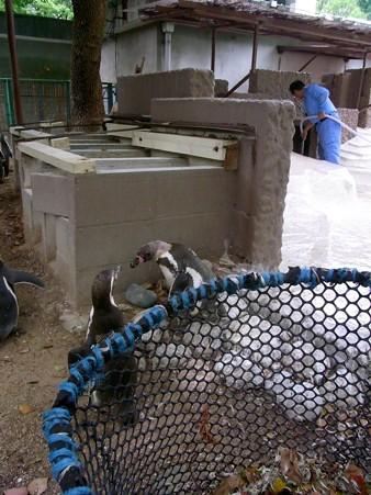 20120812 天王寺 フンボプール掃除02