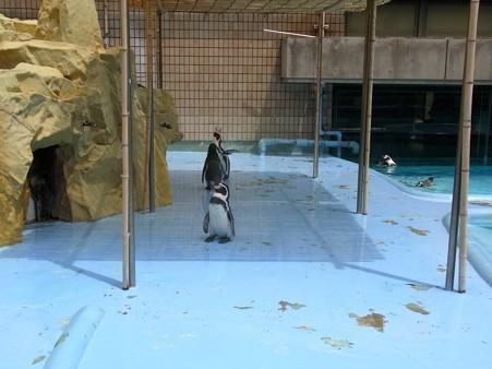 20120812 王子 坂の上のペンギンプール08