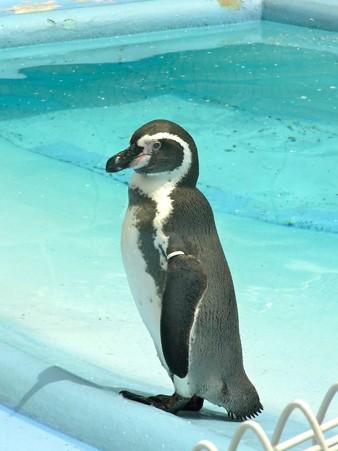20120812 王子 坂の上のペンギンプール09