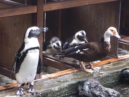 20120908 掛川 よんご
