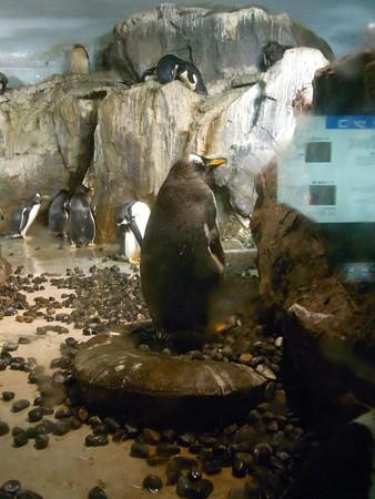 20120909 のんほい よりぬき極地館10