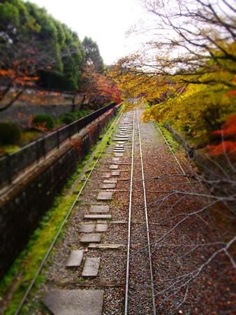 20121124 京都動 紅葉01