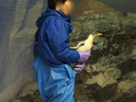 20121229 名古屋港 おでかけひな04