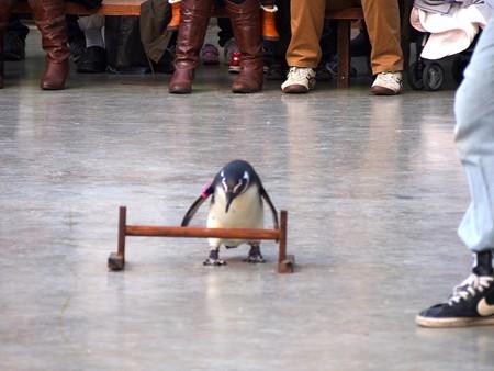 20121229 掛川 翔くんのSHOW06